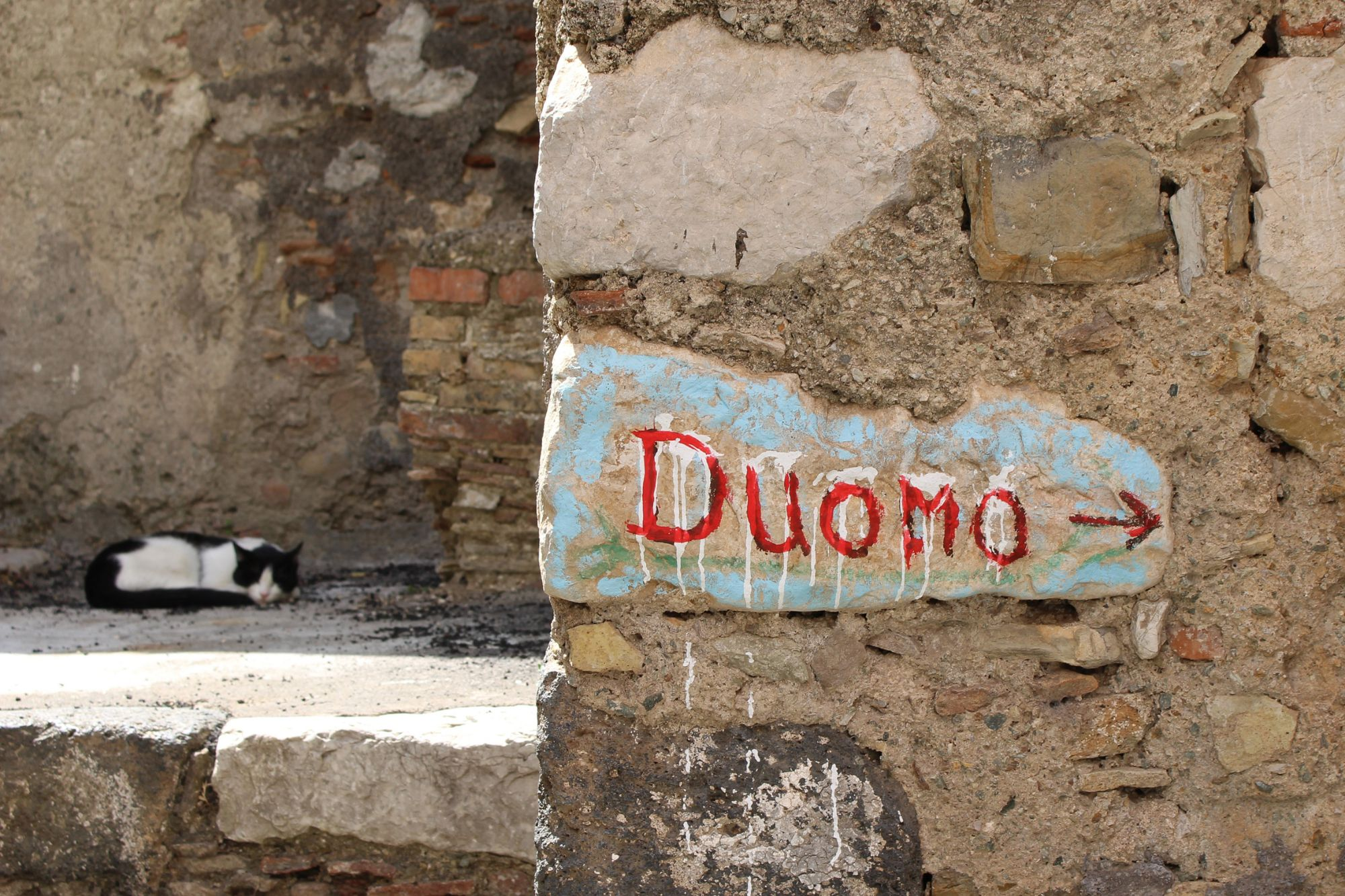 The Great Sicilian Cat Rescue Jennifer Pulling