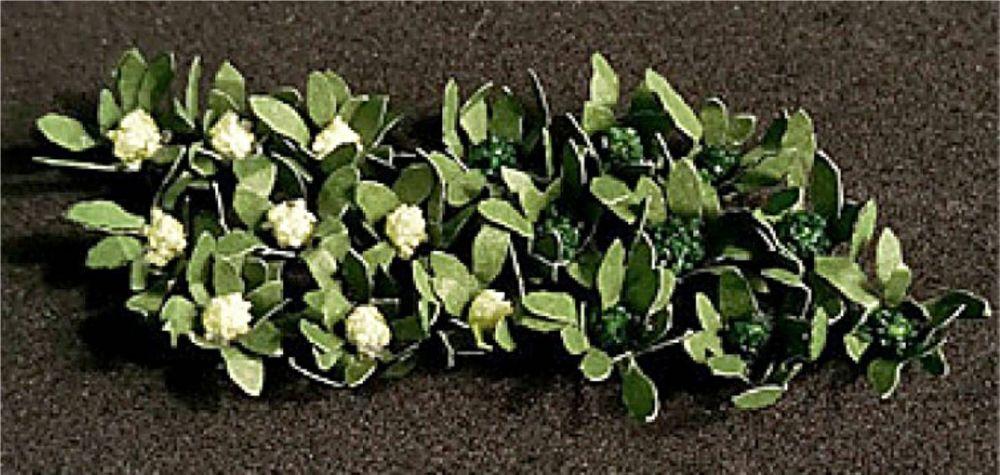 Tasma 00915  Broccoli & Cauliflowers (18)