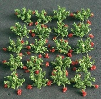 Tasma 00913  Strawberries (20)