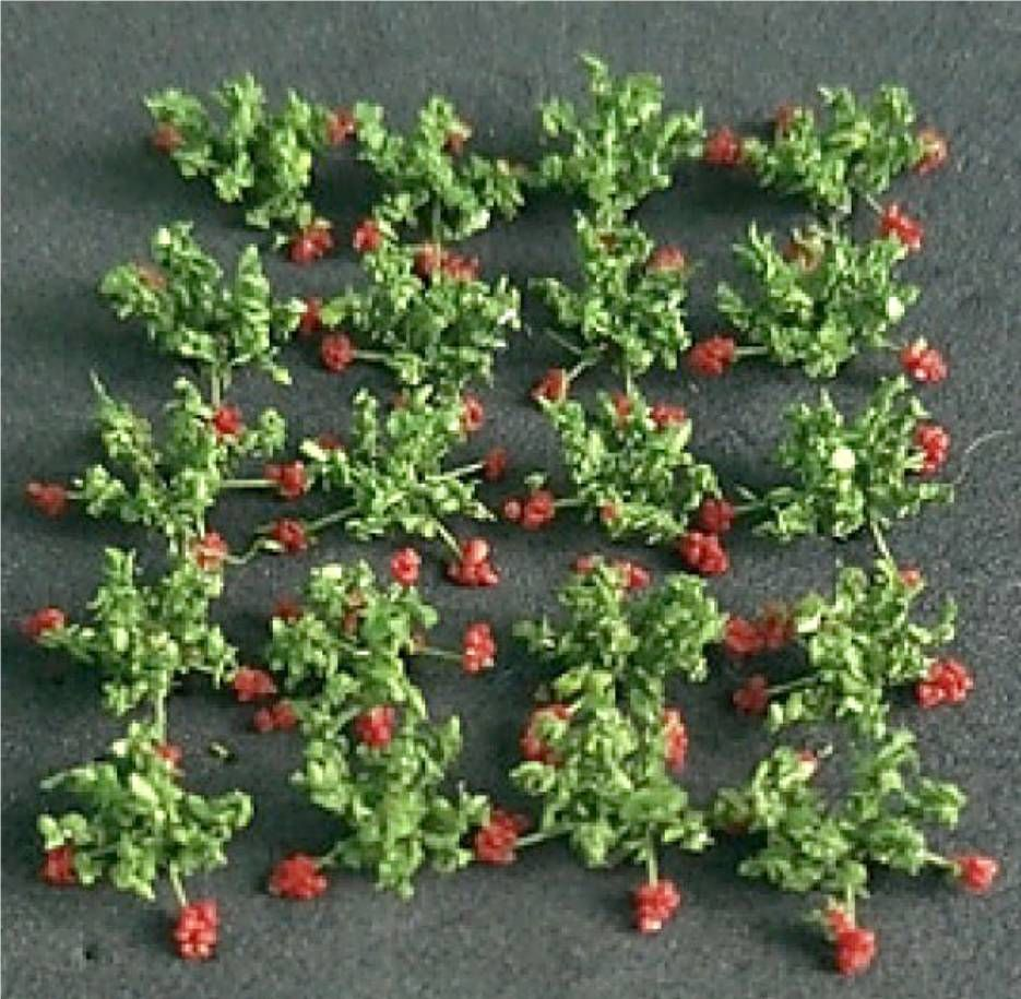 Tasma Product 00913  Strawberries (20)
