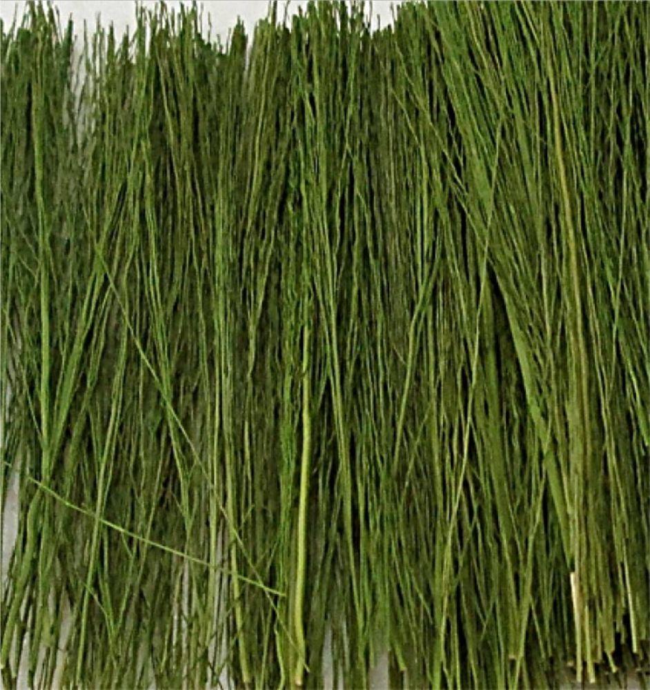 Tasma 00893  Field Grass Light Green