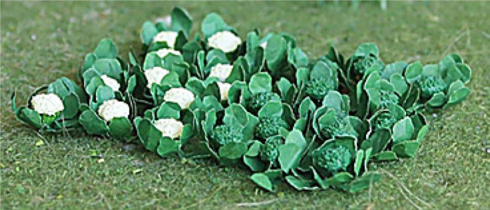 Tasma 00684  Broccoli & Cauliflowers (18)