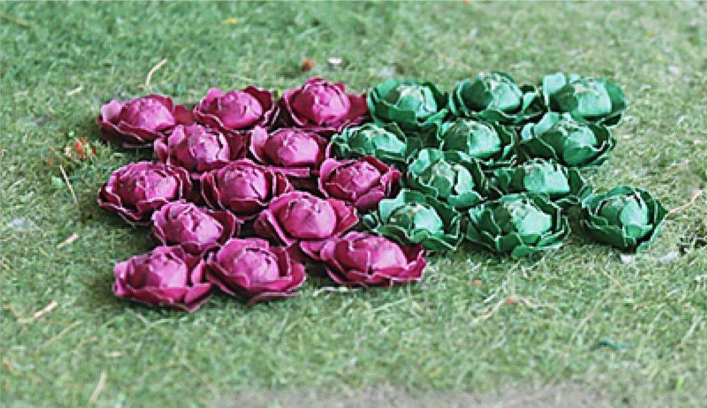 Tasma 00683  Cabbages (18)