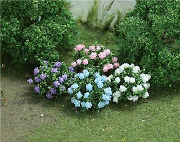 Tasma 00375  12 Hydrangea plants