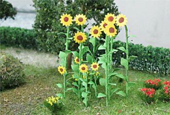Tasma 00676  Sunflowers (16)