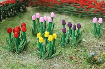 Tasma 00675  Tulips (44)