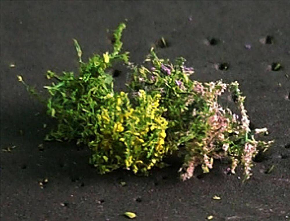 Tasma 00906  Flower Bushes (16)