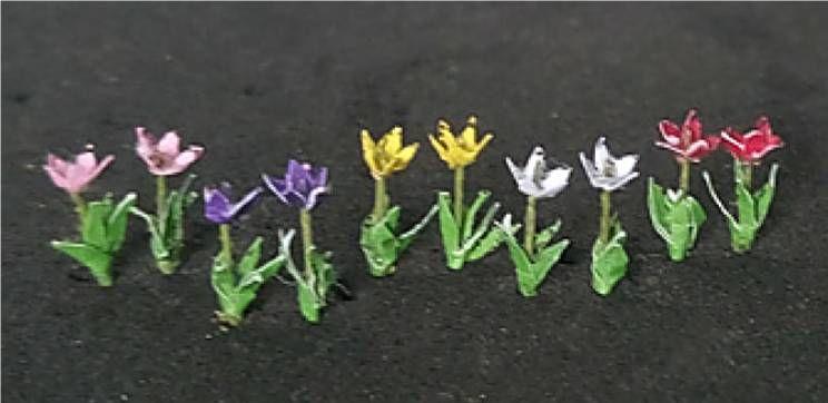 Tasma 00924  Tulips (15)