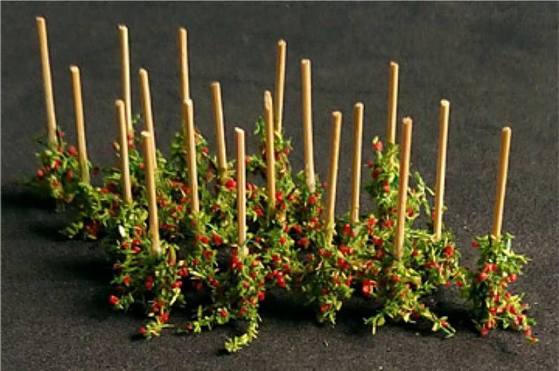 Tasma 00912  Tomato Plants (18)