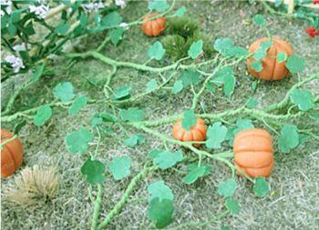 Tasma 00681  Pumpkin Plants (6)