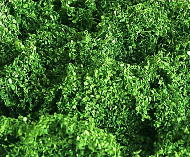 Tasma 00890  Foliage Cluster 'Light Green'