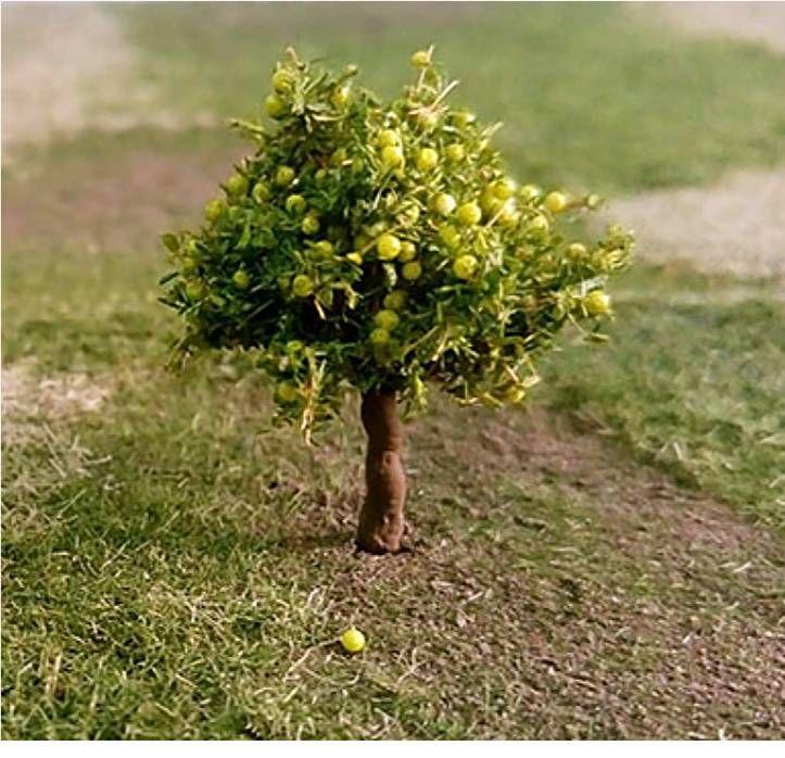 Tasma 00966  Pear Trees (4)