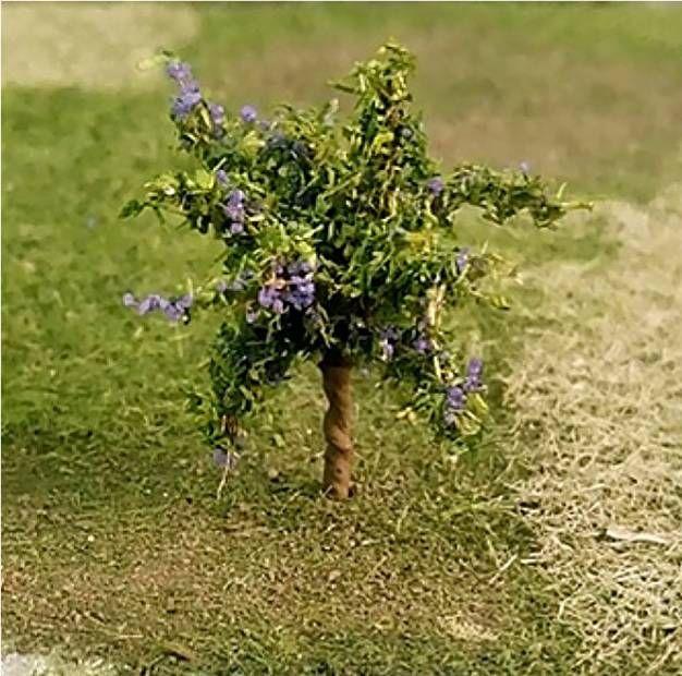 Tasma 00967  Plum Trees (4)