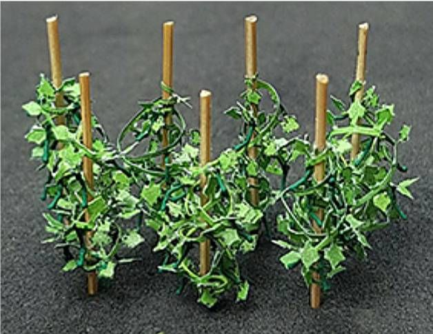 Tasma 00992  Cucumber plants (12 per pack)