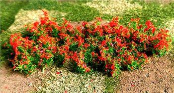 Tasma 00983  Red Poppies