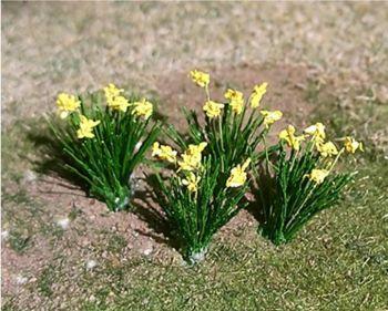 Tasma 00982  Daffodils