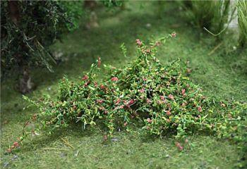 Tasma 00380  Raspberries (12)