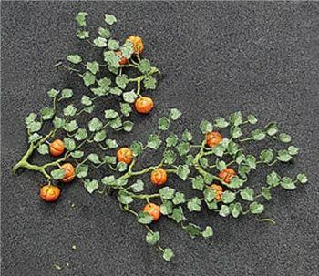 Tasma 00991  Pumpkin Plants (5 per pack)