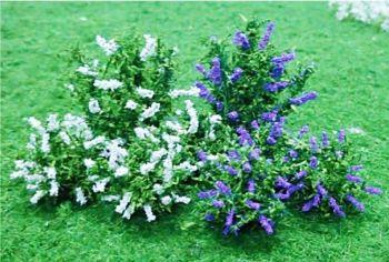 Tasma 01004  Buddleia plants (10 per pack)