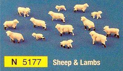 N5177  Sheep & Lambs