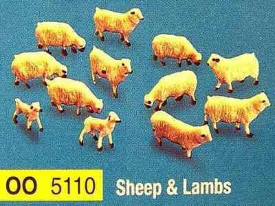 5110  Sheep & Lambs
