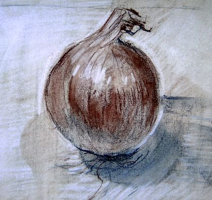 Suzy Drake - onion drawing