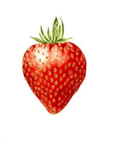 Jill Winch Strawberry