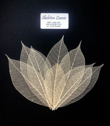 Skeleton Leaves  - pk of approx 15 leaves