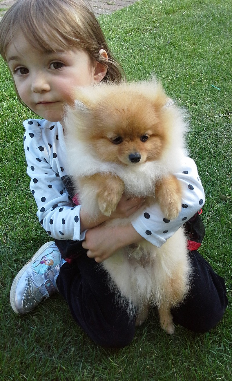Alannah and Pomeranian