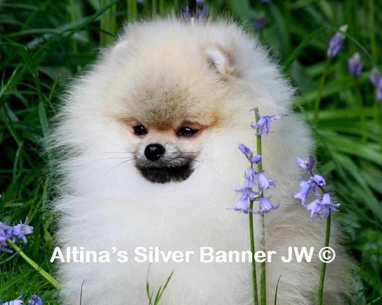 Altina's Silver Banner