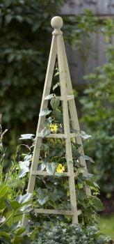 5054003 1.9 Woodland Obelisk Sage