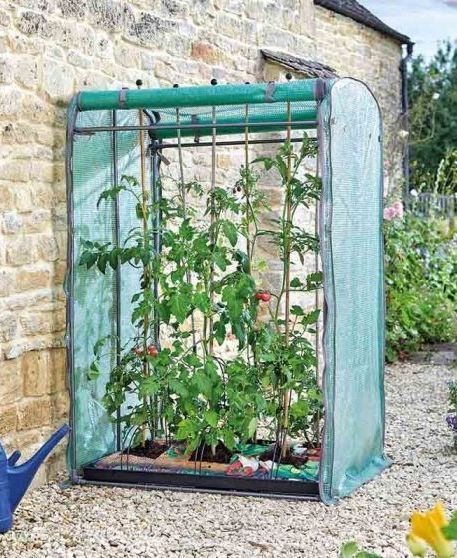 Smart Garden Tomato Gro-Zone Max Double Sided Growhouse