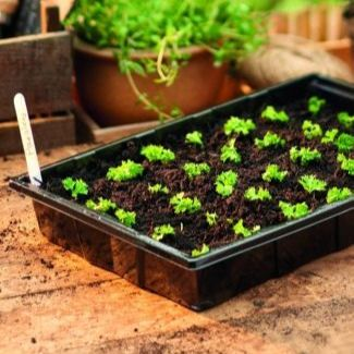 Seed Trays, Seed Tray Lids & Seed Tray Inserts