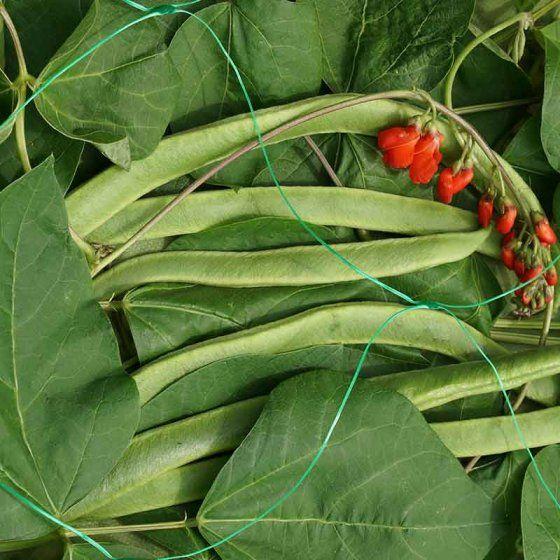 Smart Garden Pea & Bean Netting 150mm mesh 10m x 2m