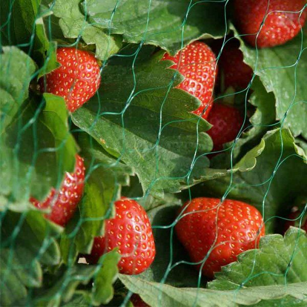 Smart Garden Fruit and Vegetable Garden Netting 15mm Mesh 10m x 2m