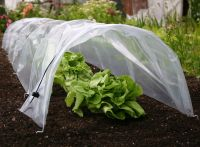 Haxnicks Easy Poly Tunnel - Garden Cloche 3m x 45cm x 30cm
