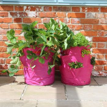 Haxnicks Strawberry & Herb Patio Planter - 2 pack
