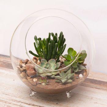 Panacea Large Glass Succulent Terrarium Desktop Planter Ornament