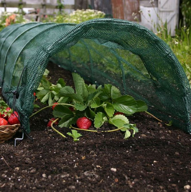 <!-- 012 --> Cloches & Grow Tunnels