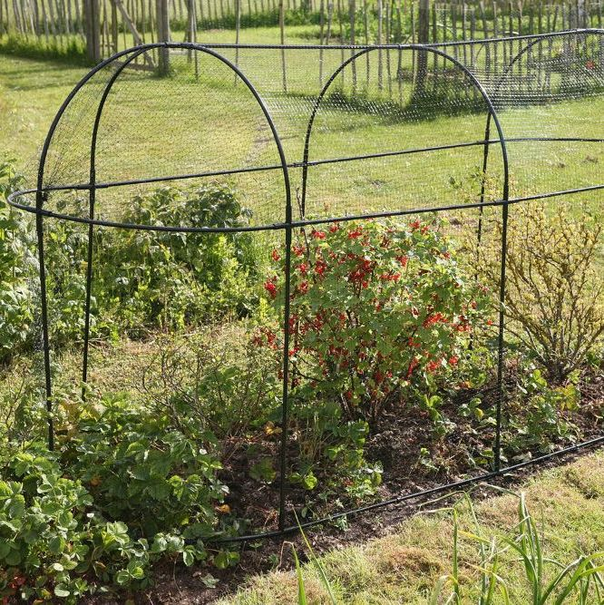 <!-- 024 -->Plant Protection & Netting