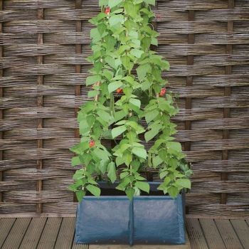 Haxnicks Pea & Bean Patio Planter Tub