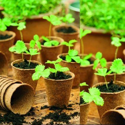 Fibre Pots & Seedling Pots