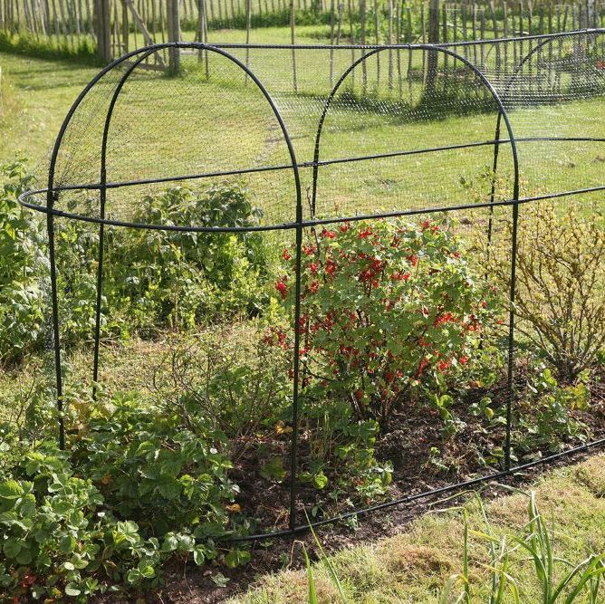 Plant Protection & Cages