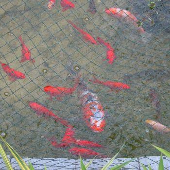 Tildenet Pond & Plant Netting 20mm mesh 8m x 2m