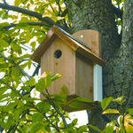 <!--014-->Bird Boxes, Feeders, Tables and Food