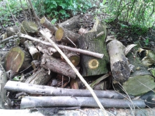Log pile for attracting wildlife