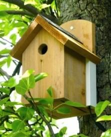Wild Bird Nest Box in tree