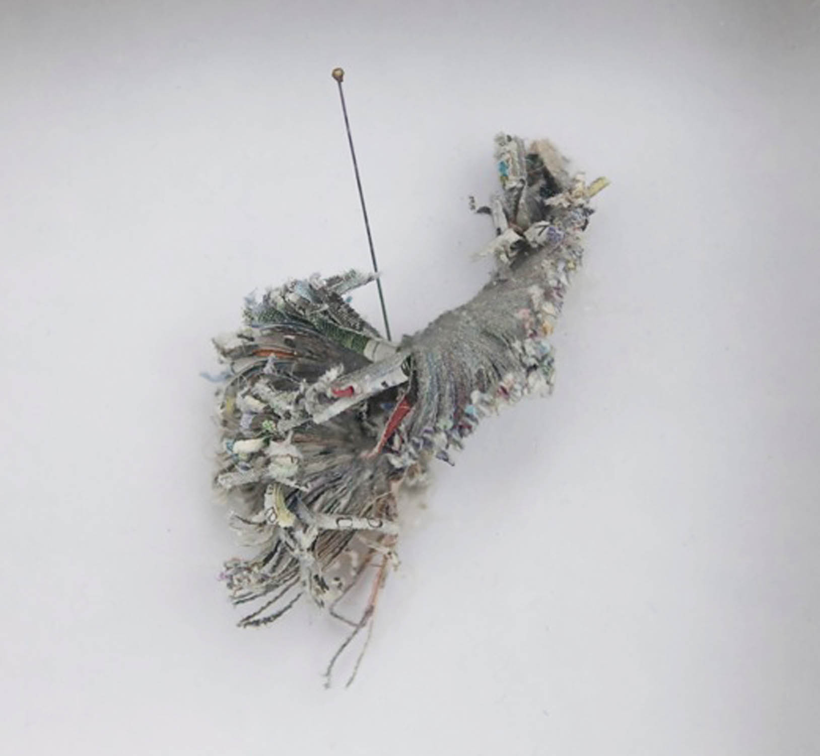 newsapaper artwork by Tracey Falcon, title LEVESON EXHIBITS newspaper trimmed to resemble organic form held for display with lepidoptery pins