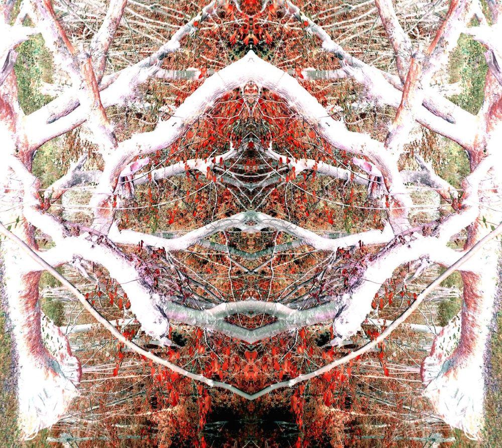 fallen tree nude mirror inverse turned small