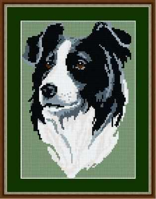 Border Collie Tapestry Kit - Brigantia Needlework